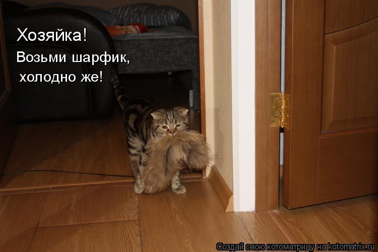 Котоматрица: Хозяйка! Возьми шарфик, холодно же!