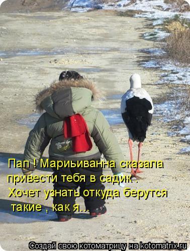 Котоматрица: Пап ! Мариьиванна сказала  привести тебя в садик . Хочет узнать откуда берутся  такие , как я...