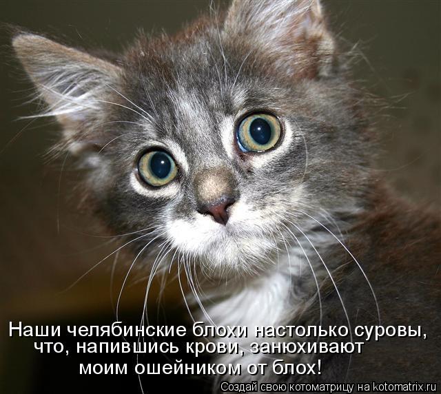 Котоматрица: Наши челябинские блохи настолько суровы, что, напившись крови, занюхивают  моим ошейником от блох!