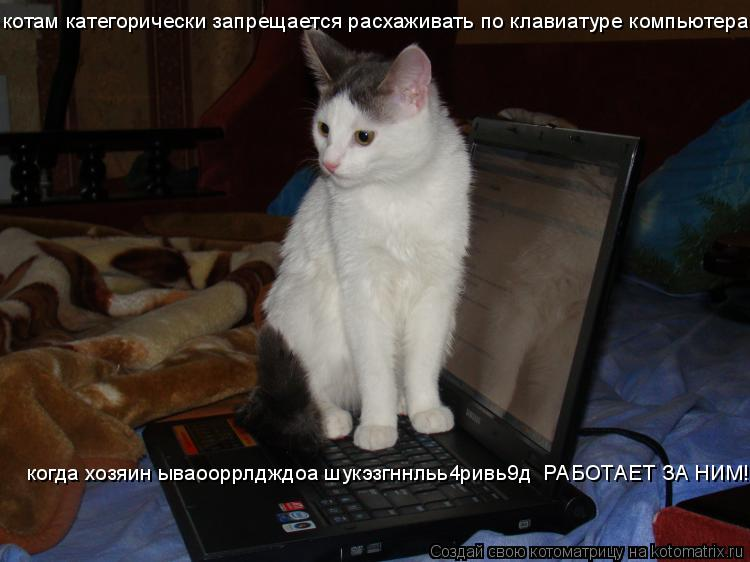 смайлики для скайпа кошка: