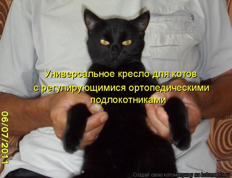 Котоматрица: Универсальное кресло для котов с регулирующимися ортопедическими  подлокотниками