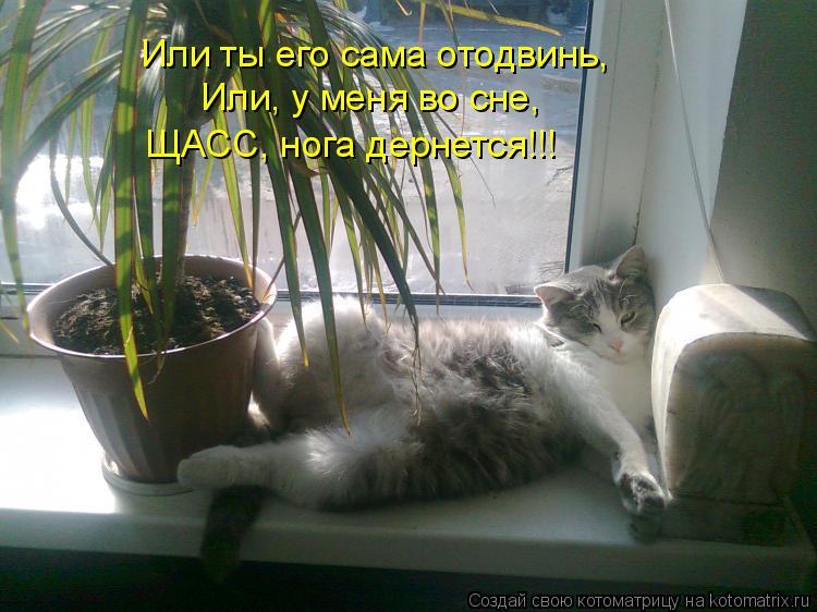 Котоматрица - Или ты его сама отодвинь, Или, у меня во сне, ЩАСС, нога дернется!!!