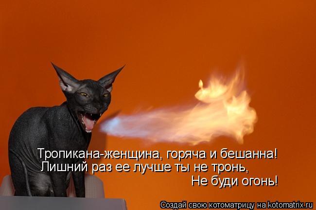 Котоматрица: Тропикана-женщина, горяча и бешанна! Лишний раз ее лучше ты не тронь, Не буди огонь!