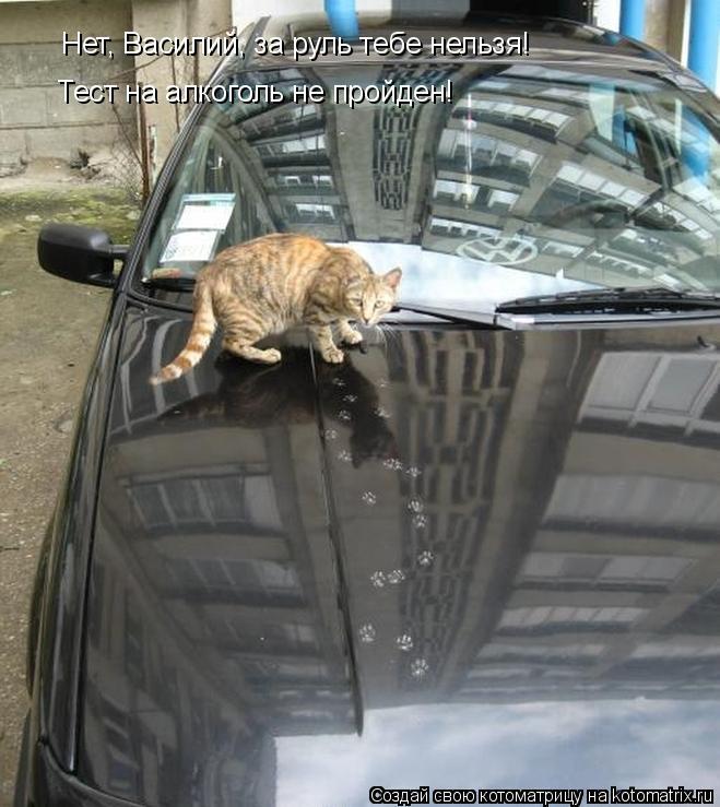 Котоматрица: Нет, Василий, за руль тебе нельзя! Тест на алкоголь не пройден!