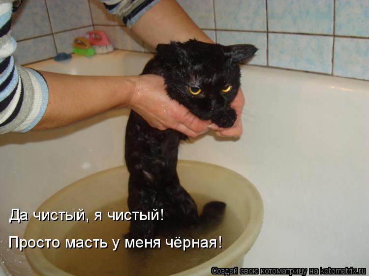 Котоматрица: Да чистый, я чистый! Просто масть у меня чёрная!