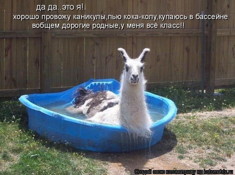 Котоматрица: да да..это я!  хорошо провожу каникулы,пью кока-колу,купаюсь в бассейне вобщем дорогие родные,у меня всё класс!!