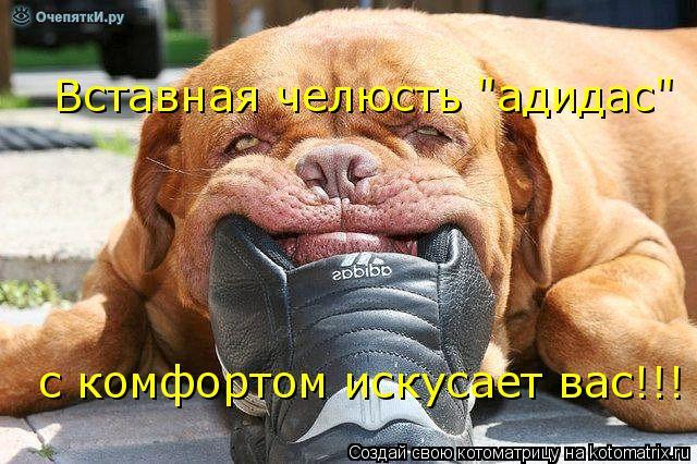 """Котоматрица: Вставная челюсть """"адидас"""" с комфортом искусает вас!!!"""