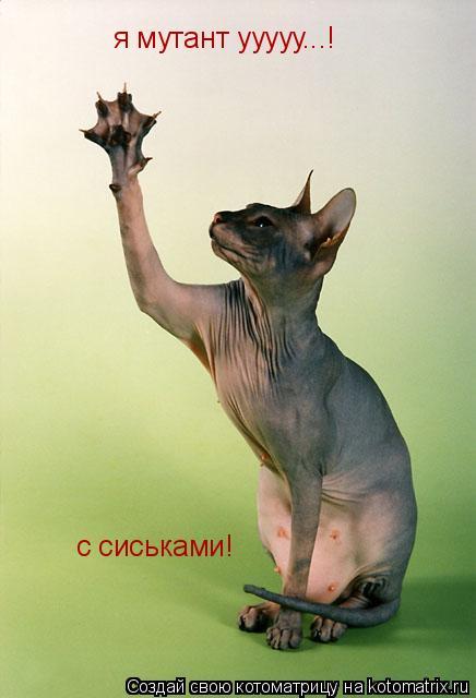 Котоматрица: я мутант ууууу...! с сиськами!