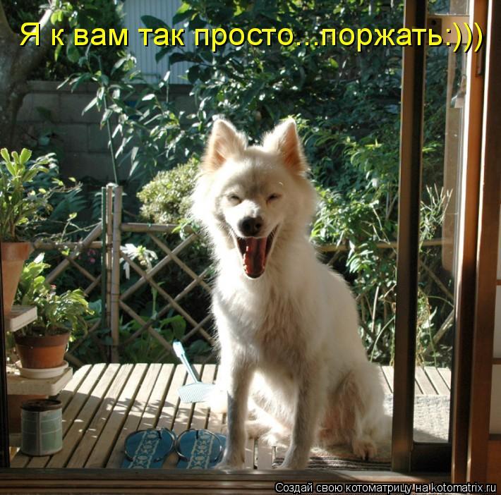 Котоматрица: Я к вам так просто...поржать:)))