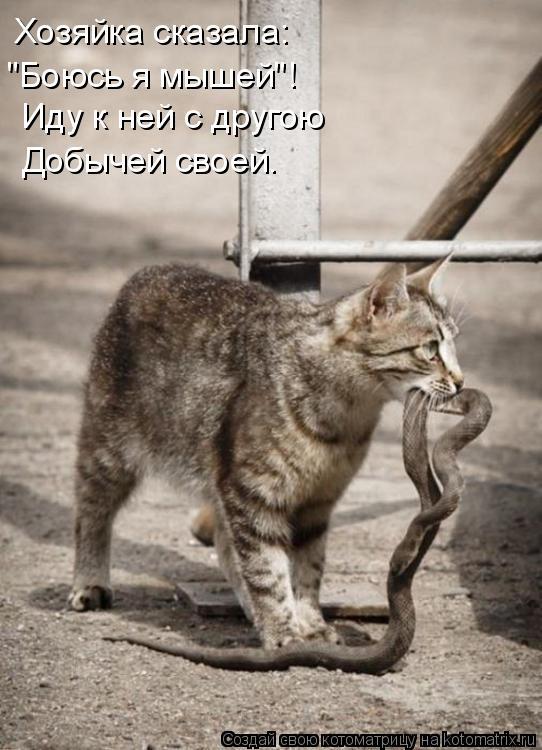 """Котоматрица: Хозяйка сказала: """"Боюсь я мышей""""! Иду к ней с другою Добычей своей."""