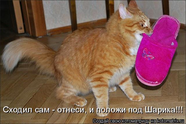 Котоматрица - Сходил сам - отнеси, и положи под Шарика!!!