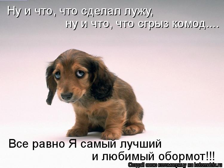 Котоматриця!)))) - Страница 9 1058282