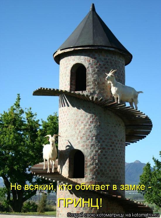 Котоматрица - Не всякий, кто обитает в замке - ПРИНЦ!