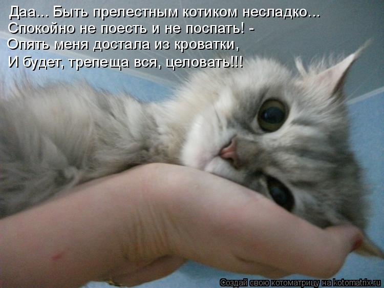 Котоматрица - Даа... Быть прелестным котиком несладко... Спокойно не поесть и не пос