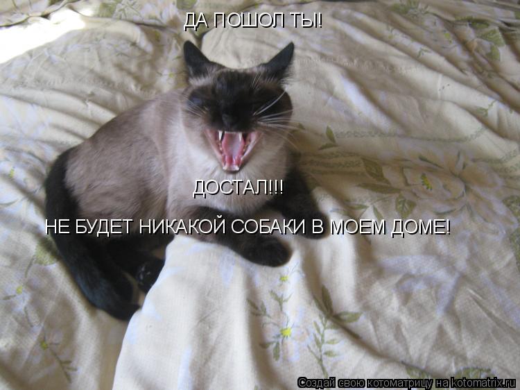 Котоматрица: ДА ПОШОЛ ТЫ! ДОСТАЛ!!! НЕ БУДЕТ НИКАКОЙ СОБАКИ В МОЕМ ДОМЕ!