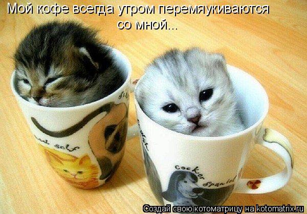 Котоматрица: Мой кофе всегда утром перемяукиваются со мной...