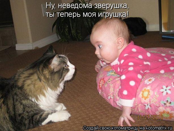 Котоматрица: Ну, неведома зверушка, ты теперь моя игрушка!