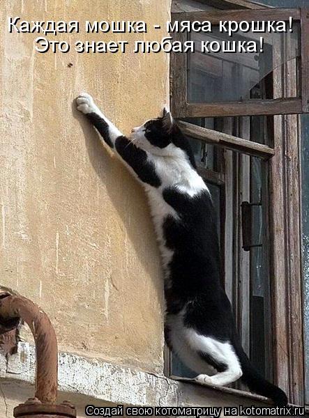 Котоматрица - Каждая мошка - мяса крошка! Это знает любая кошка!