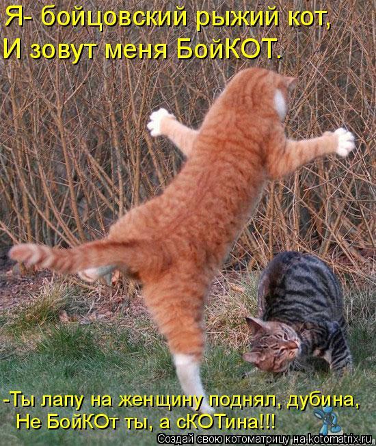 Котоматрица: И зовут меня БойКОТ. Не БойКОт ты, а сКОТина!!! -Ты лапу на женщину поднял, дубина, Я- бойцовский рыжий кот,