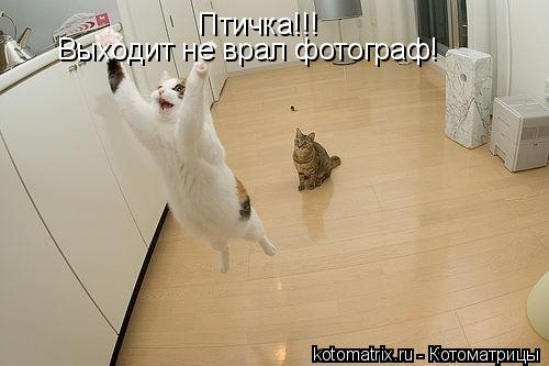 Котоматрица: Птичка!!! Выходит не врал фотограф!