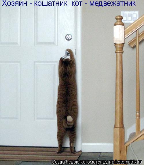 Котоматрица: Хозяин - кошатник, кот - медвежатник