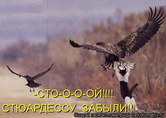 Котоматрица: -СТО-О-О-ОЙ!!!! СТЮАРДЕССУ  ЗАБЫЛИ!!!