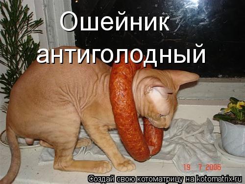 Котоматрица: Ошейник антиголодный
