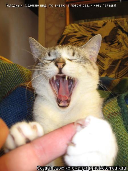Котоматрица: Голодный..Сделаю вид что зиваю, а потом раз..и нету пальца!
