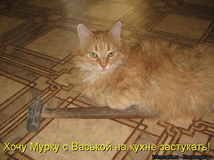 Котоматрица: Хочу Мурку с Васькой на кухне застукать!