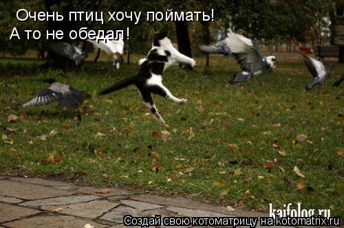 Котоматрица: Очень птиц хочу поймать! А то не обедал!
