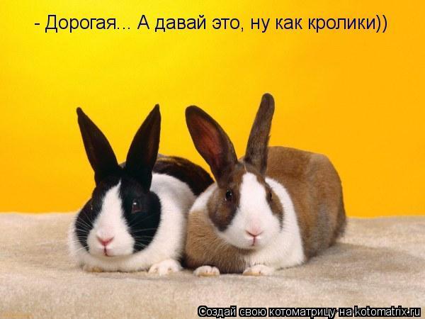Котоматрица: - Дорогая... А давай это, ну как кролики))