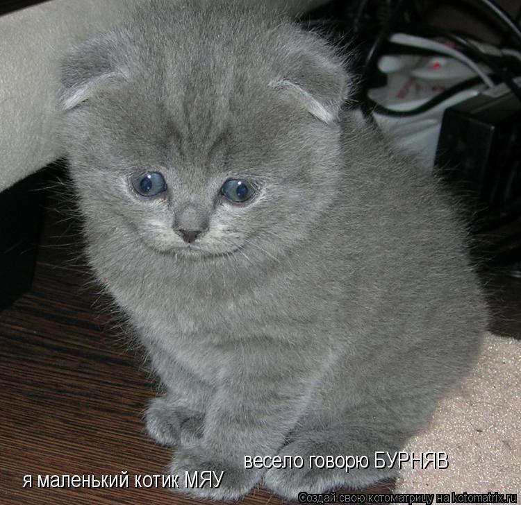 Котоматрица: я маленький котик МЯУ весело говорю БУРНЯВ