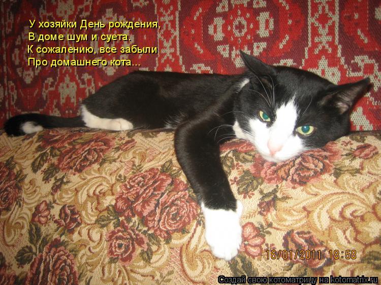 Котоматрица: У хозяйки День рождения, В доме шум и суета. К сожалению, все забыли Про домашнего кота...