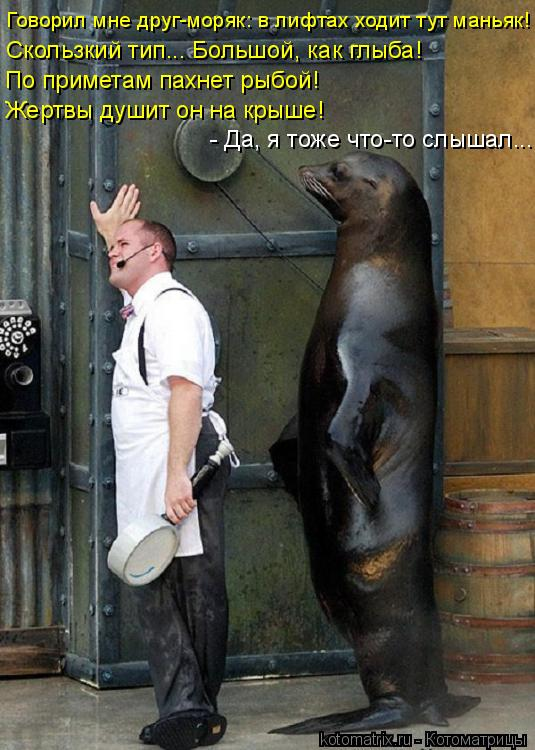 Котоматрица: Говорил мне друг-моряк: в лифтах ходит тут маньяк! Скользкий тип... Большой, как глыба! По приметам пахнет рыбой! Жертвы душит он на крыше! - Да,