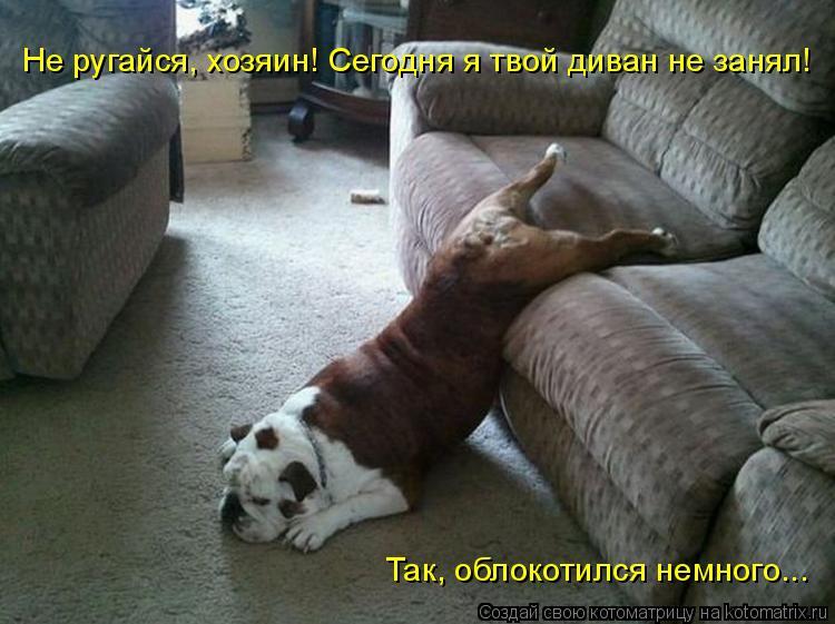 Котоматрица: Так, облокотился немного... Не ругайся, хозяин! Сегодня я твой диван не занял!