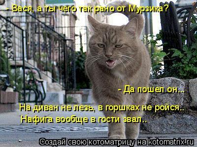 Котоматрица: - Вася, а ты чего так рано от Мурзика?  На диван не лезь, в горшках не ройся.. - Да пошел он...  Нафига вообще в гости звал..