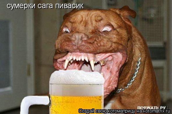 Котоматрица: сумерки сага пивасик