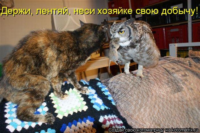 Котоматрица: Держи, лентяй, неси хозяйке свою добычу!