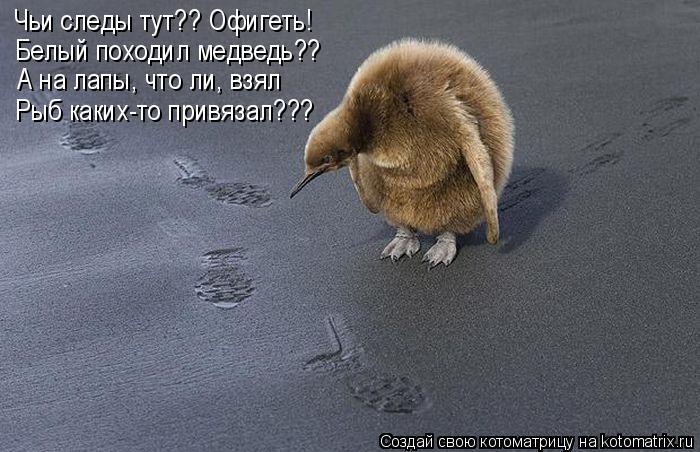 Котоматрица: Чьи следы тут?? Офигеть! Белый походил медведь?? А на лапы, что ли, взял Рыб каких-то привязал???
