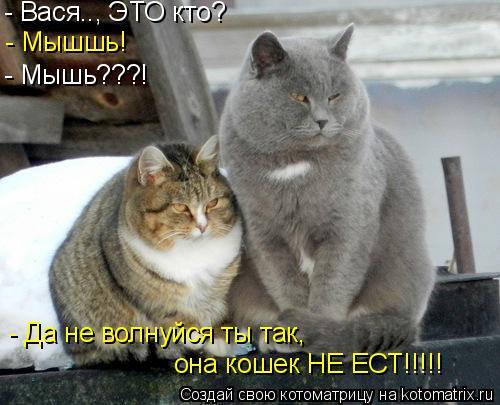 Котоматрица: - Мышшь! - Мышь???! - Да не волнуйся ты так,  - Вася.., ЭТО кто? она кошек НЕ ЕСТ!!!!!