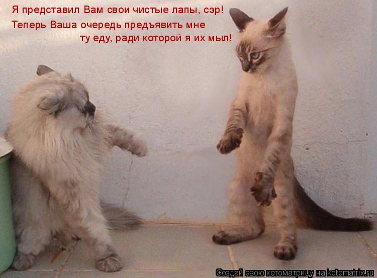 Котоматрица: Я представил Вам свои чистые лапы, сэр! Теперь Ваша очередь предъявить мне  ту еду, ради которой я их мыл!