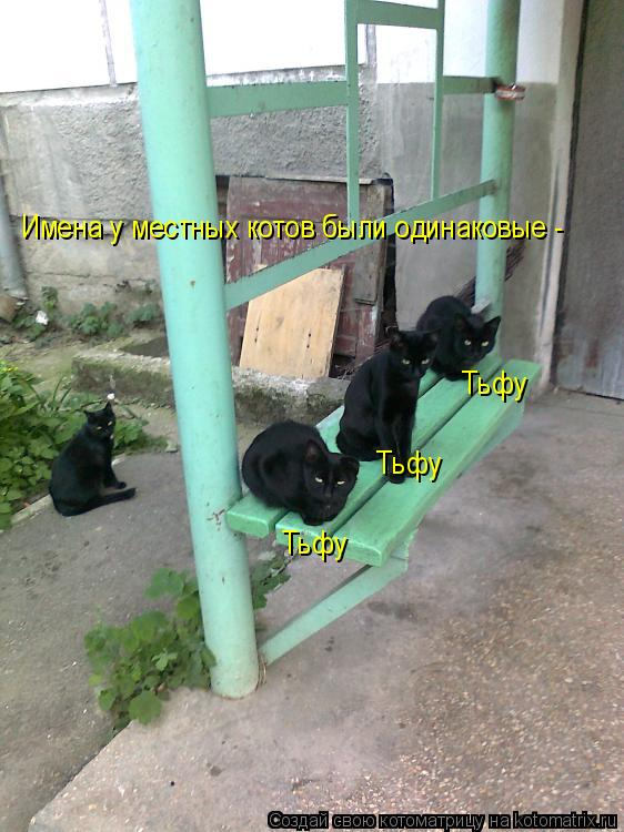 Котоматрица: Имена у местных котов были одинаковые - Тьфу Тьфу Тьфу