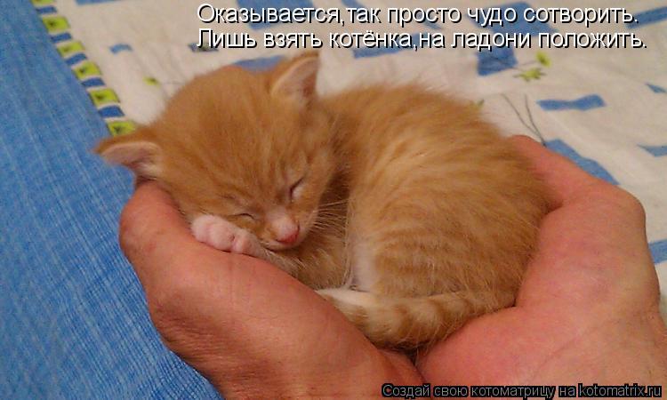 Котоматрица: Оказывается,так просто чудо сотворить. Лишь взять котёнка,на ладони положить.
