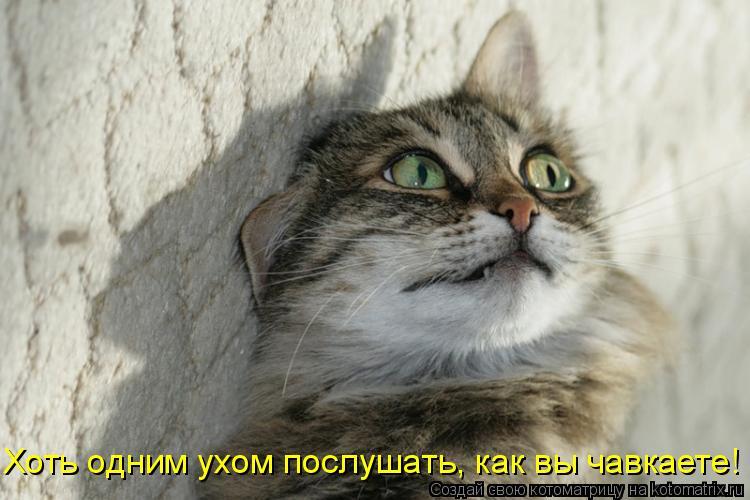 Котоматрица - Хоть одним ухом послушать, как вы чавкаете!