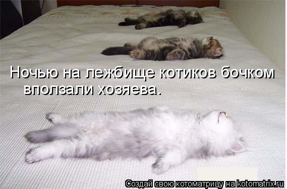 Котоматрица: Ночью на лежбище котиков бочком вползали хозяева.