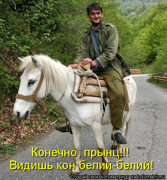 Котоматрица: Видишь кон белий-белий! Конечно, прынц!!!