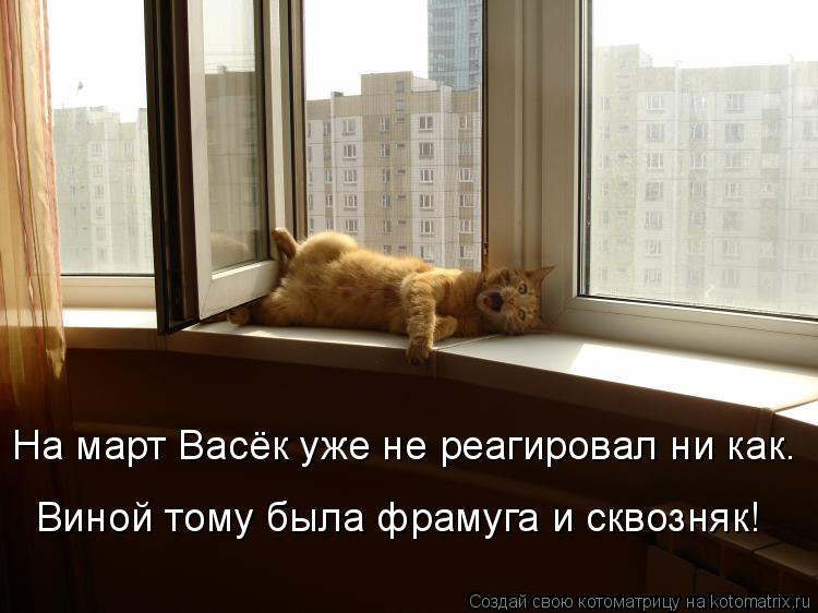 Котоматрица: На март Васёк уже не реагировал ни как. Виной тому была фрамуга и сквозняк!