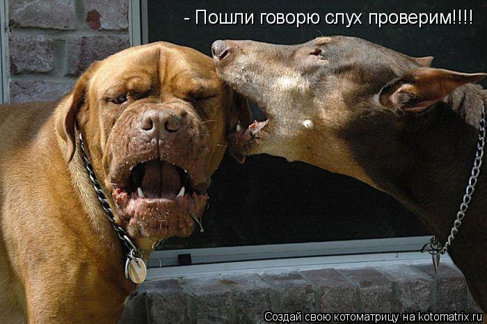 Котоматрица: - Пошли говорю слух проверим!!!!