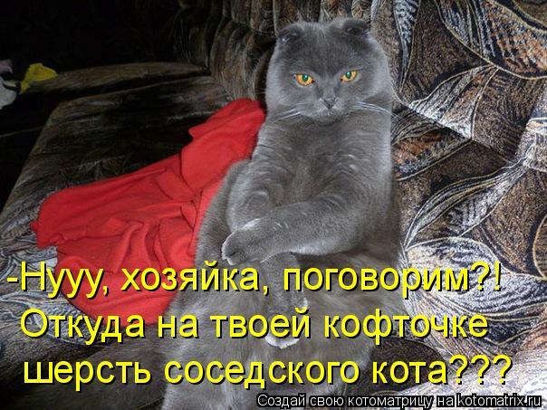 Котоматрица: -Нууу, хозяйка, поговорим?! Откуда на твоей кофточке шерсть соседского кота???