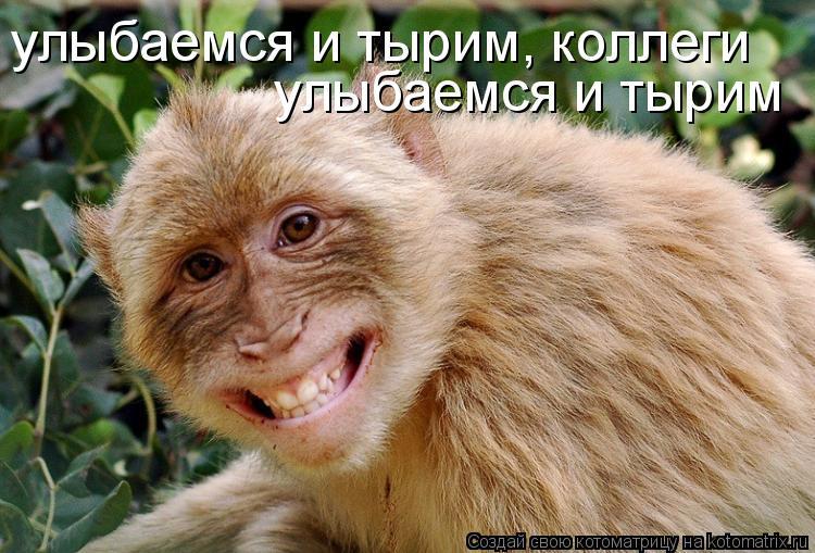Котоматрица: улыбаемся и тырим, коллеги улыбаемся и тырим